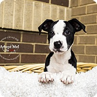 Adopt A Pet :: Shellder (Pokemon Litter) - Mooresville, NC