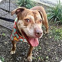Adopt A Pet :: Mama Bear - Wilmington, DE