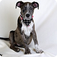 Adopt A Pet :: Wesson - Palmyra, PA