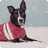 Adopt A Pet :: Hancock - Flint, MI