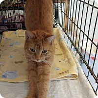 Adopt A Pet :: Honey - Middletown, NY