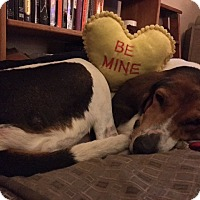 Hound (Unknown Type) Mix Dog for adoption in Prospect,, Kentucky - Dorothea