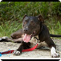 Hound (Unknown Type) Mix Dog for adoption in Sarasota, Florida - Heidi