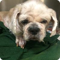 Adopt A Pet :: Blue - Oak Ridge, NJ
