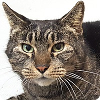Adopt A Pet :: Nutmeg - Friendswood, TX