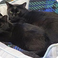Adopt A Pet :: Barnaby - Ashland, MA