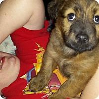 Adopt A Pet :: Kira - Shaw AFB, SC