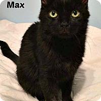 Adopt A Pet :: Max - Oakville, ON
