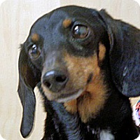 Adopt A Pet :: Mia - Wildomar, CA