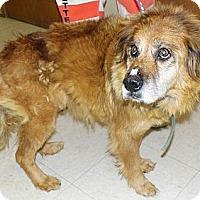 Adopt A Pet :: Ann - Washington Court House, OH