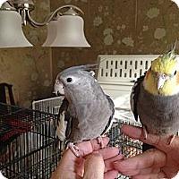 Adopt A Pet :: Raisy & Sugar - St. Louis, MO