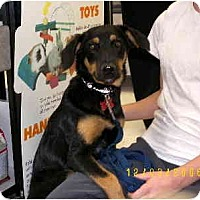 Adopt A Pet :: Zippy - Scottsdale, AZ
