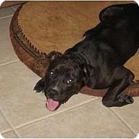 Adopt A Pet :: Ziggy - Mesa, AZ