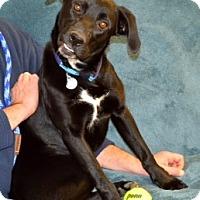 Adopt A Pet :: Oreo - Homewood, AL