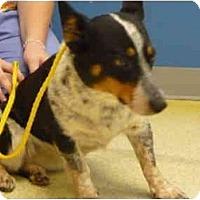 Adopt A Pet :: Althea - Inola, OK