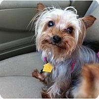 Adopt A Pet :: Tia - Miami, FL
