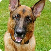 Adopt A Pet :: Koda - Wayland, MA