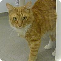 Adopt A Pet :: Uncle B - Hamburg, NY