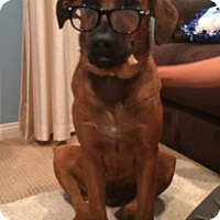 Adopt A Pet :: Cooper - Brea, CA