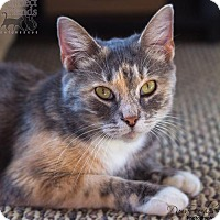 Adopt A Pet :: Claudia - Cincinnati, OH