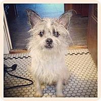 Adopt A Pet :: Toby - Adoption Pending - West Allis, WI
