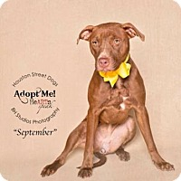 Adopt A Pet :: September - Rocky Hill, CT