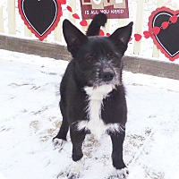 Adopt A Pet :: Tristan - West Chicago, IL