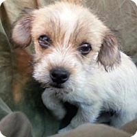 Adopt A Pet :: Emery - Austin, TX