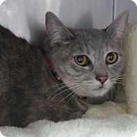 Adopt A Pet :: Twinkie - Hawthorne, CA