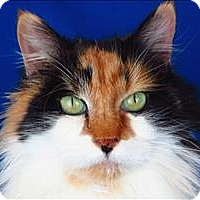 Adopt A Pet :: Polly Anna - Sherwood, OR