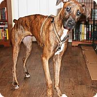 Adopt A Pet :: Jewels - Umatilla, FL