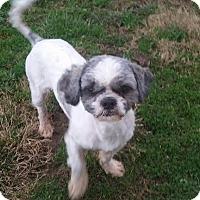 Adopt A Pet :: Davis VanCleve - Urbana, OH