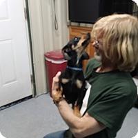 Adopt A Pet :: SCHNITZEL - Lubbock, TX