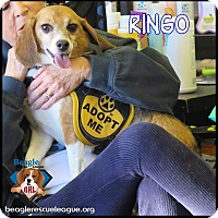 Adopt A Pet :: Ringo - Yardley, PA