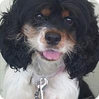 Adopt A Pet :: Gwen - Sugarland, TX