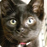 Adopt A Pet :: Stella - Medina, OH