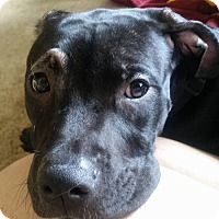 Adopt A Pet :: Rue - Grand Rapids, MI