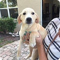 Adopt A Pet :: Curley - Royal Palm Beach, FL