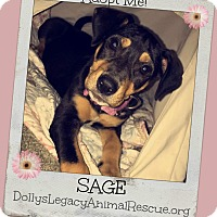 Adopt A Pet :: SAGE - Lincoln, NE