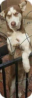 Husky Mix Dog for adoption in Dana Point, California - Kasey
