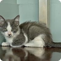 Adopt A Pet :: Niall - San Antonio, TX