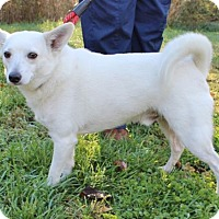 Terrier (Unknown Type, Medium)/Chihuahua Mix Dog for adoption in Hillsdale, Indiana - Winchester