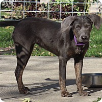 Adopt A Pet :: Harley - Joliet, IL