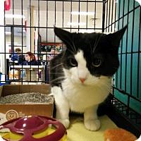 Adopt A Pet :: Lina - Avon, OH