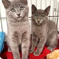 Adopt A Pet :: Ben & Jerry - Key Largo, FL