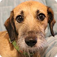 Adopt A Pet :: Lizbeth - Charlotte, NC