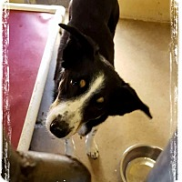 Adopt A Pet :: Tex - Parker, KS