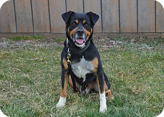 Rottweiler Mix Dog for adoption in New Cumberland, West Virginia - Slim