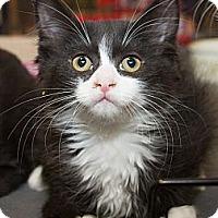 Adopt A Pet :: Nicolette - Irvine, CA