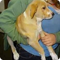 Adopt A Pet :: Evelyn - Antioch, IL